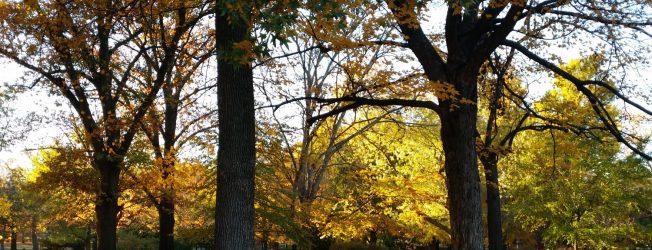 cropped-trees-4.jpg